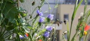 Hortus auf Balkonien – Ratgeber zur Hotspotzone