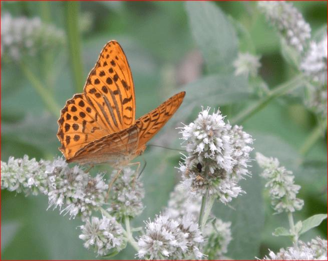 You are currently viewing Schmetterlinge im Garten