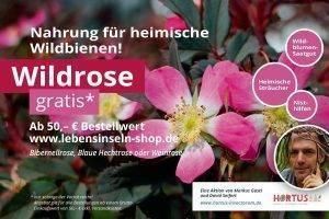 Wildrosen-Aktion für Hortusianer