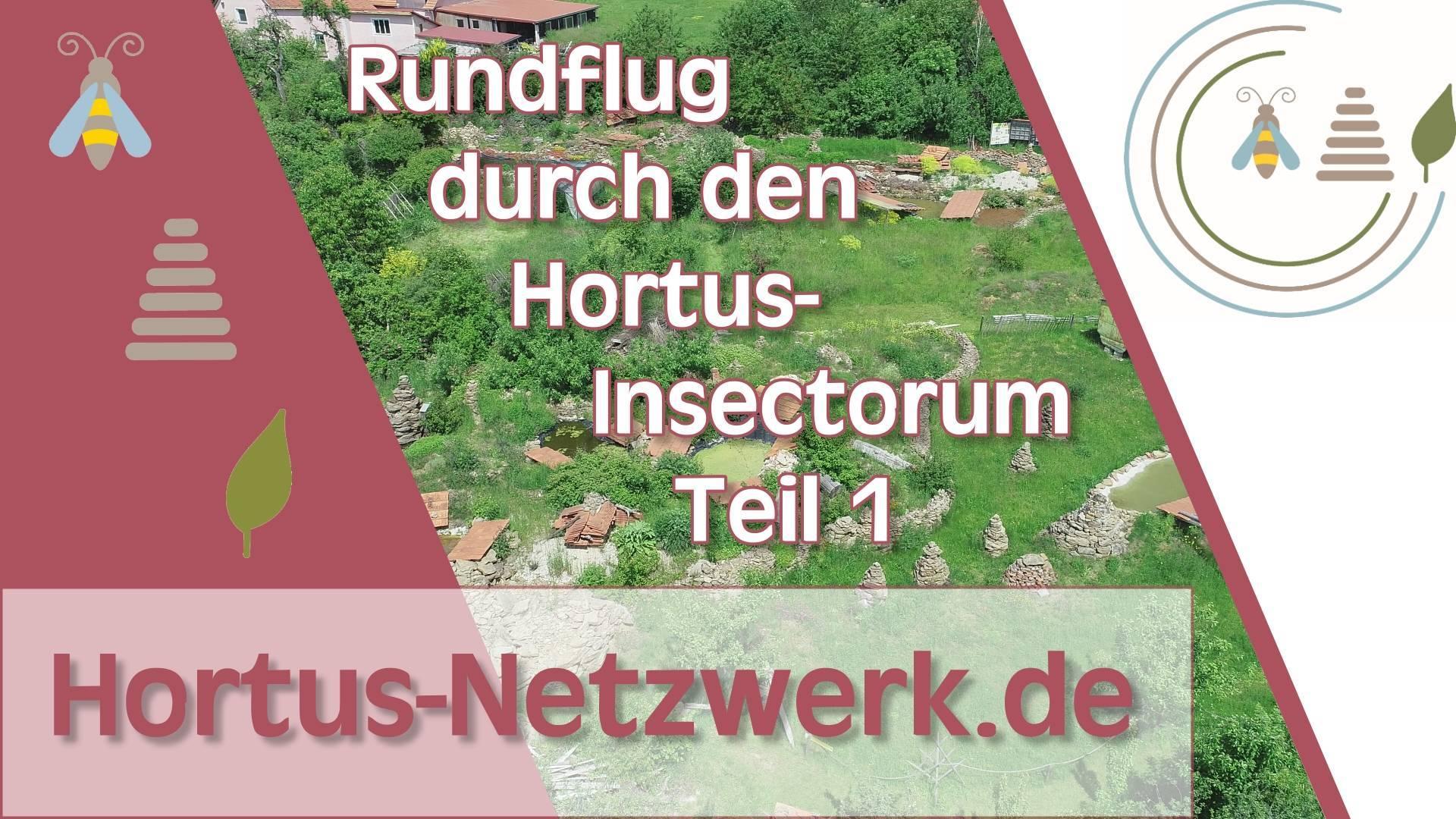 Neues Video auf YouTube Online – Rundflug über den Hortus-Insectorum Teil 1