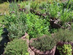 Pflanzendatenbank: Das Thema des Monats August 2020 – Würzkräuter