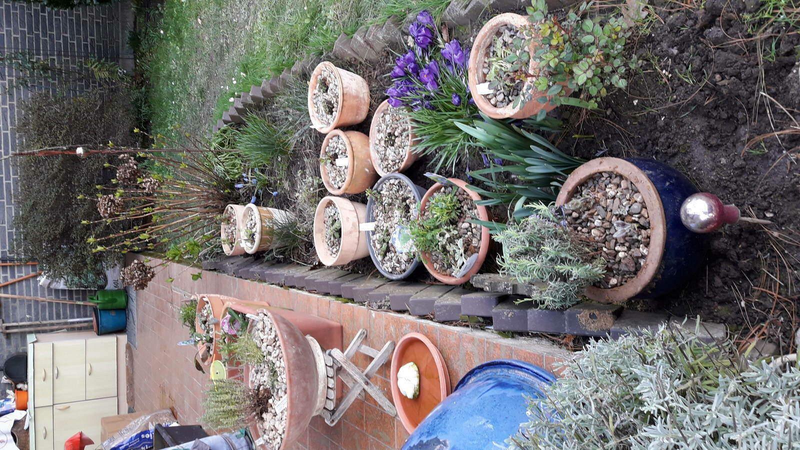 4.-Pflanzen-in-Töpfe-gepflanzt-als-Zwischenort.jpg