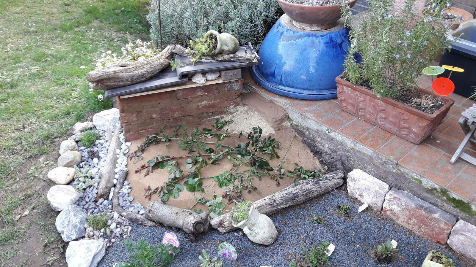 16.-Rosenzweige-auf-dem-Sandarium-als-Schutz-gegen-Katzen.jpg
