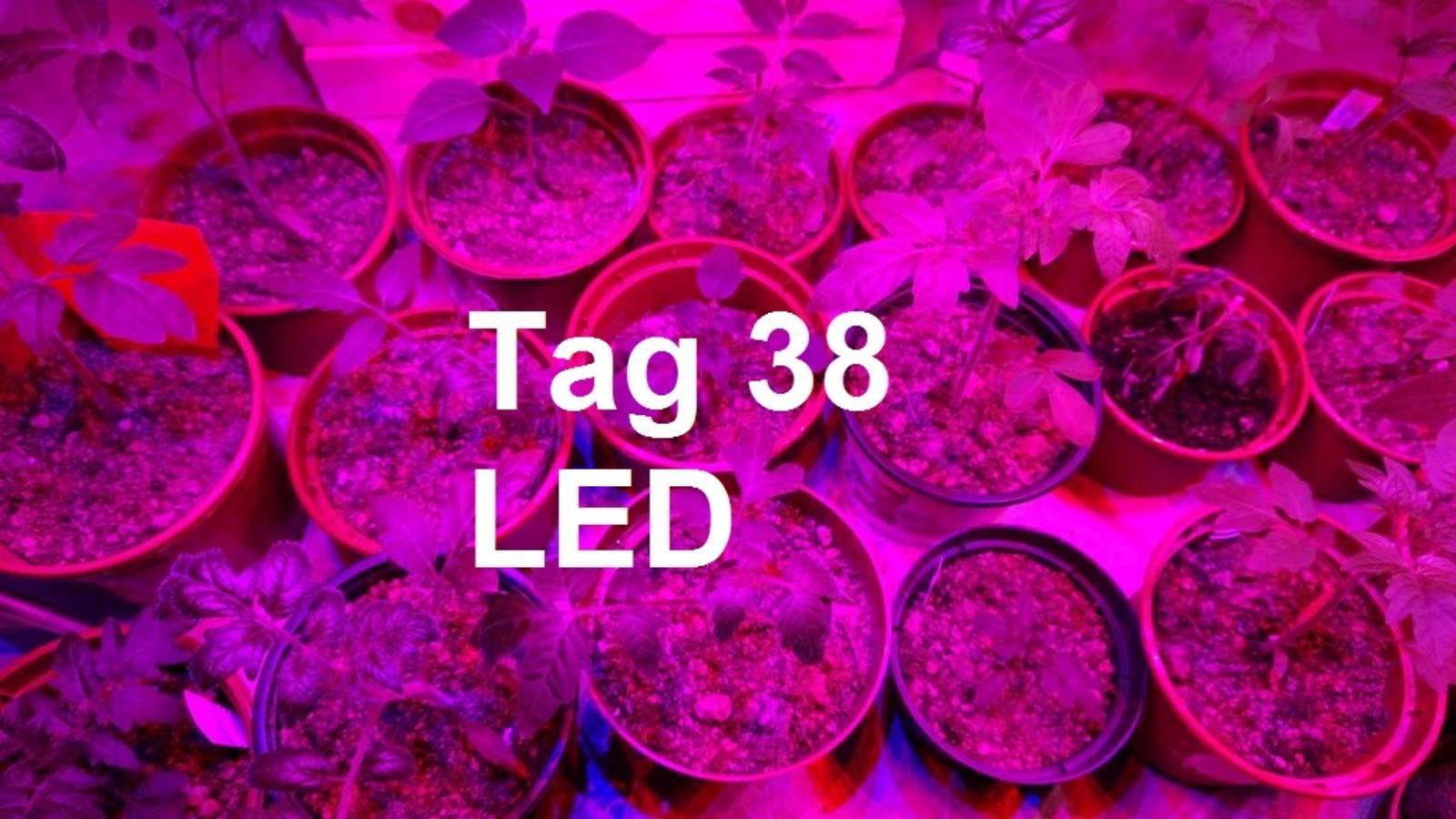 190429_tomaten_led1.JPG