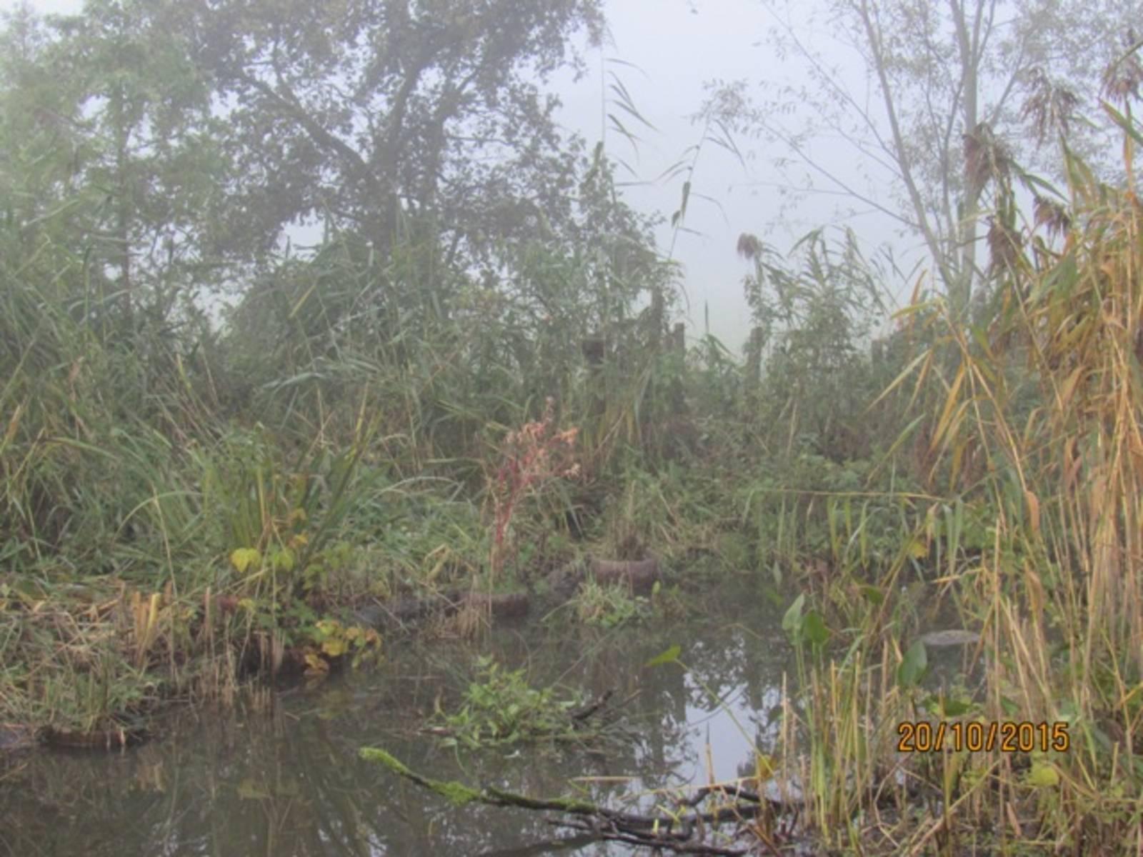 Herbstmorgen-IMG_9278.JPG