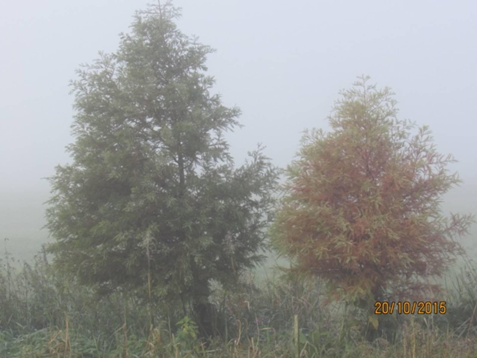 Herbstmorgen-IMG_9285.JPG