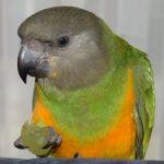 Profilbild von Robert