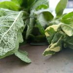 Profilbild von Herbularum Rapumque