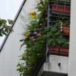 Profilbild von Bio-Balkon Birgit Schattling