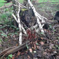 Totholz im Waldbeet