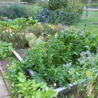 Gemüsebeet Sommer 2019