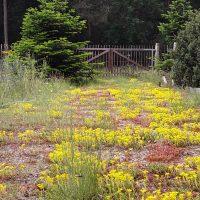 Blumenschotterrasen