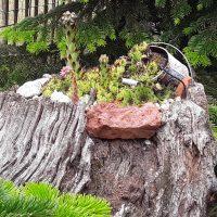 Totholz – sehr belebt