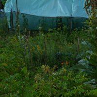 Insektenhotel mit Gemüseabfall